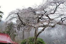 Ashikaga Park, Ashikaga, Japan