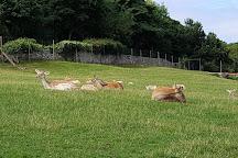Bodafon Farm Park, Llandudno, United Kingdom