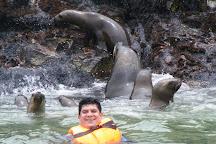 Palomino, Callao, Peru