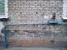 Норман, Кондратьевский проспект, дом 56Б на фото Санкт-Петербурга