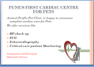 Animal Profile Pet Clinic And Diagnostics Baner Pune