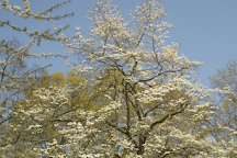 Connecticut College Arboretum, New London, United States