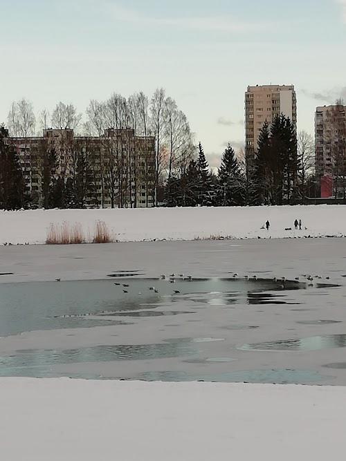 Park area of Õismäe pond
