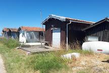 Maison de l'Huitre, Gujan-Mestras, France