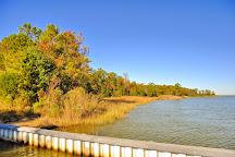 Hog Island Wildlife Management Area, Surry, United States