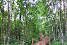 Matang Mangrove Forest Reserve, Kuala Sepetang, Malaysia