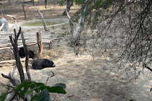 Wildlife SoS Bear Sanctuary, Agra, India