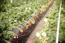Tateyama Strawberry Picking Center, Tateyama, Japan