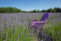 Lavender By The Bay, East Marion, United States