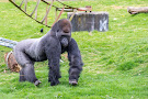 Port Lympne Wild Animal Park
