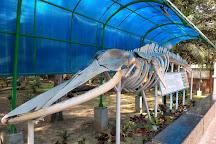 Marine Aquarium, Digha, India
