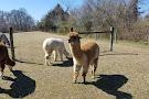 Bay Springs Farm Alpacas