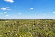 Tallgrass Prairie Preserve, Pawhuska, United States