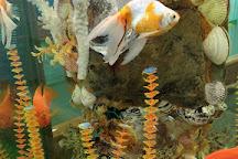 The Bathyscaphe - Marine Aquarium, Anapa, Russia