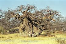 Kubu Island, Makgadikgadi Pans National Park, Botswana