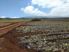 Haliimaile Pineapple Co Ltd maui hawaii
