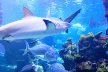 Aquarium des Lagons Nouvelle Caledonie, Noumea, New Caledonia