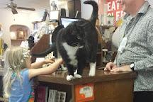 City Lights Bookstore, Sylva, United States