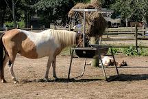 Chincoteague Pony Centre, Chincoteague Island, United States