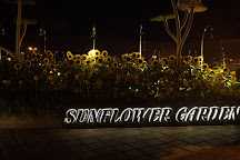 Sunflower Garden, Singapore, Singapore