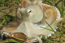 Gulf Specimen Marine Lab & Aquarium, Panacea, United States