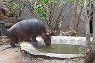 Hippo Jessica