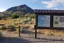 Oak Springs Trilobite Area, Caliente, United States