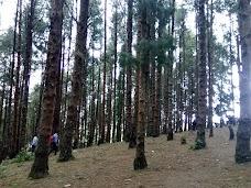 Tree Park ooty