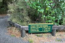 Thunder Creek Falls, Wanaka, New Zealand