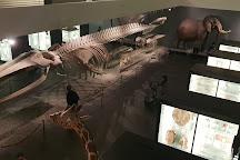 Museum of Natural History of Bern, Bern, Switzerland
