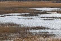 Parker River National Wildlife Refuge, Newburyport, United States
