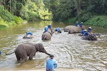 Thai Elephant Conservation Center, Lampang, Thailand