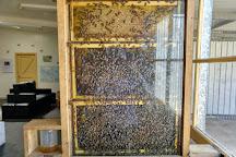 Clifford's Honey Farm, Kingscote, Australia
