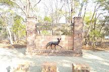 Painted Dog Conservation, Hwange, Zimbabwe