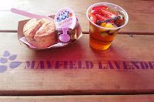 Mayfield Lavender Farm, Banstead, United Kingdom
