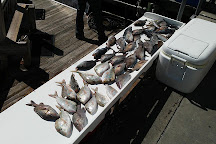 Daisy Mae Fishing Charters, Clearwater, United States