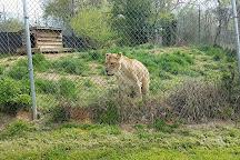 Carolina Tiger Rescue, Pittsboro, United States