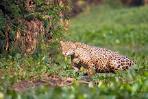 Pantanal Jaguar Safaris, Chapada dos Guimaraes, Brazil