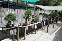 Jardin Arboretum Bonsai, Mialet, France