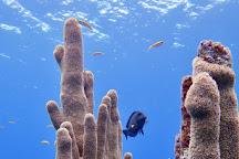 Mayan Divers, West Bay, Honduras
