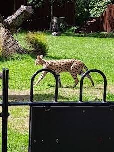 Servals london