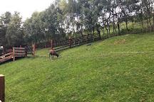 Cairngorm Reindeer Centre, Glenmore, United Kingdom