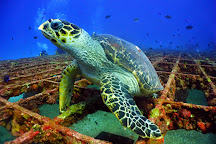Scuba Diving Cancun, Cancun, Mexico