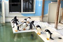 Otaru  Aquarium, Otaru, Japan