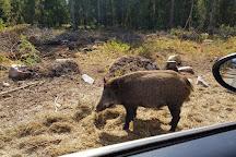 Kosta Safaripark, Kosta, Sweden