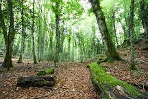 Foresta Umbra, Monte Sant'Angelo, Italy