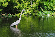 Wakodahatchee Wetlands, Delray Beach, United States