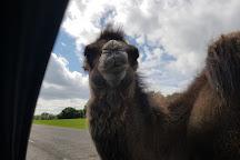 Knowsley Safari Park, Prescot, United Kingdom