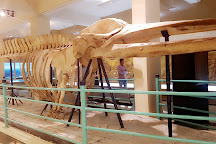 Pakistan Museum of Natural History, Islamabad, Pakistan