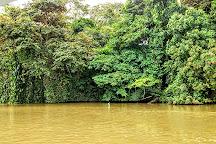 Tortuguero Canal, Puerto Limon, Costa Rica